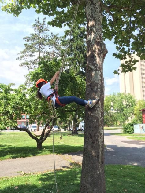 One of the components of Arboriculture is Tree-Climbing!