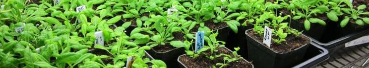 Plant_11_2_0.jpg